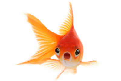 Image of goldfish surprised that Vanguard guarantees new patients | Vanguard Communications | Denver, CO | San Jose, CA | Jacksonville, FL