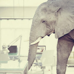 Patient conversations | Vanguard Communications | Elephant in a medial lab