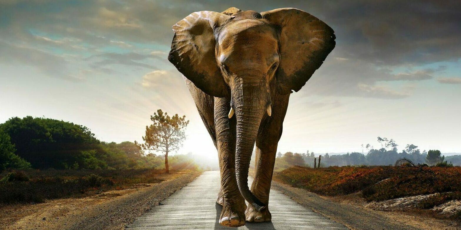 Elephant walking on road to illustrate blog about breaking bad habits | Vanguard Communications | Denver, CO