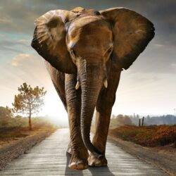 Elephant walking on road to illustrate blog about breaking bad habits | Vanguard Communications | Denver, CO